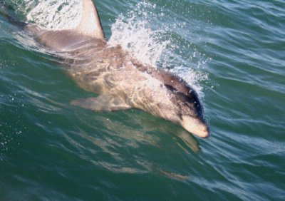 Dolphin Watch La Quinta South Padre Island 21 of 31