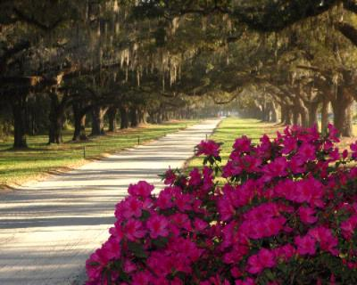 Boone Hall Plantation -Avenue Of Oaks 27 of 28
