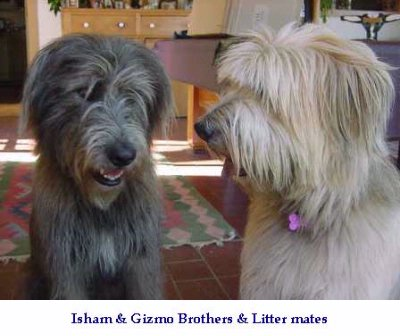 Isham And Gizmo 5 of 7