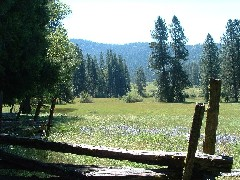 Meadow in Wawona 10 of 11
