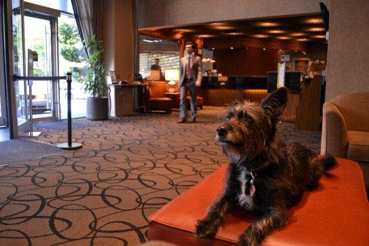 Pet Friendly Hotel 22 of 25