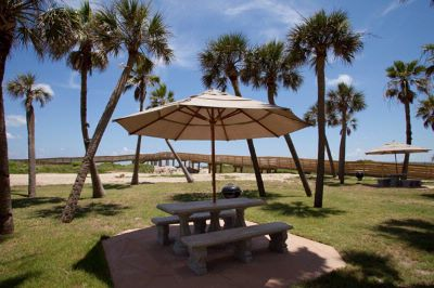 Beach Front Picnic And Grill Palm Tree Garden Setting 21 of 21