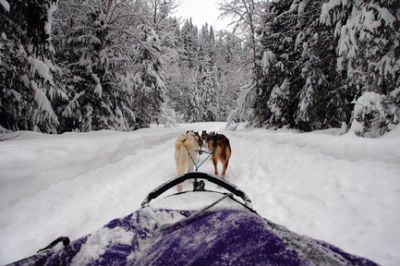 Dog Sledding 16 of 16