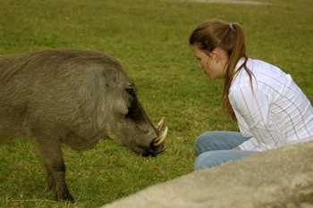 Guest With Matumi The Warthog 6 of 16