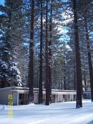 Pine Cone Acre Motel Surrounded By Beautiful Pine Trees 11 of 11