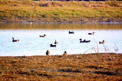Birds At The Kalakho Lake 29 of 31