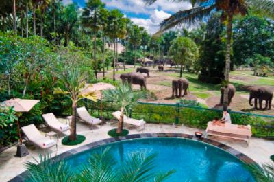 Pool Overlooking Elephant Safari Park 3 of 6