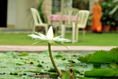 Lotus Pond Front Garden 4 of 31