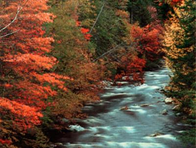 Neaby Mad River In All Its Fall Glory 8 of 11