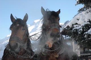 Romantic Winter Sleigh Rides ... 10 of 31