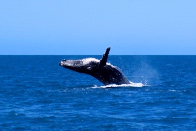 Whale Watching From July To December 15 of 15