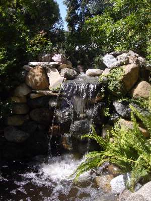 Waterfall In Our Fantasy Garden 21 of 31