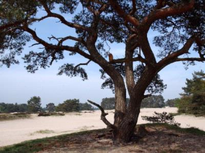 Dunes Of Soestduinen 15 of 30