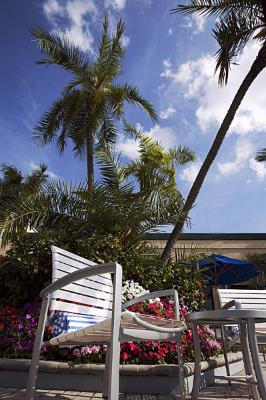 Palm Trees And A Typical Florida Sky Set The Mood For Fun And Enjoyment By The Pool. 6 of 8