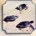 Unique Opportunities To See Sea Turtles Nesting / Hatching -Seasonally 12 of 13