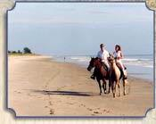Horseback Riding On The Beach -Only Minutes Away (Call For Information) 10 of 15