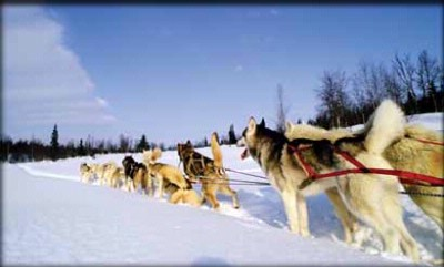 Dog Sled For The First Time In Your Life 14 of 29