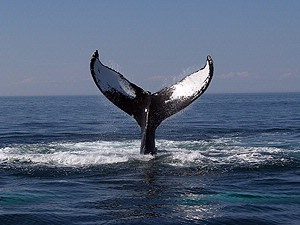 Whale Watching Is A Great Group Experience 21 of 26