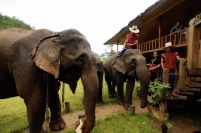 Elephants At The Lodge 6 of 12